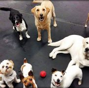 Dog Day Care_Group