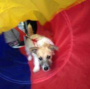 Muckyhound-doggy-day-care (7)