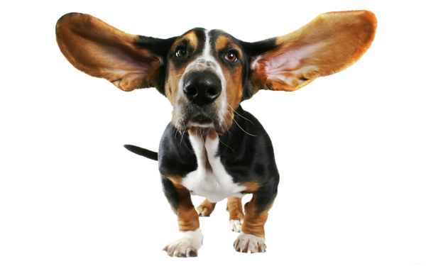 Register for Muckyhound Dog Training classes