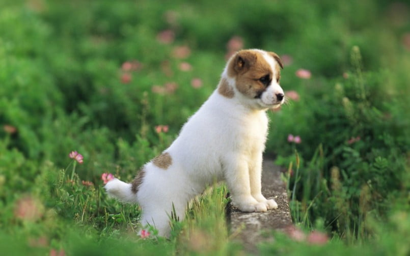 It's a dogs life - Canine Education Blog Archives - Mucky