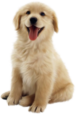 dog-png-transparent-20